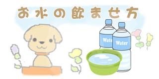お水の飲ませ方